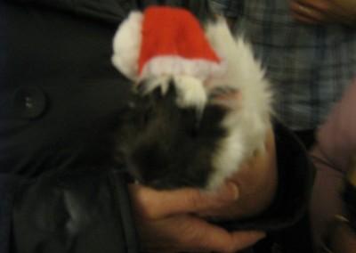 Ambar Noel